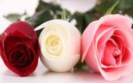 Pink Rose Flowers Wallpapers  21 Free Wallpaper