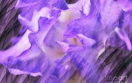 Purple Flowers Painting  30 Free Hd Wallpaper