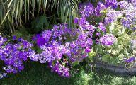 Purple Flowers Perennials  1 Free Hd Wallpaper