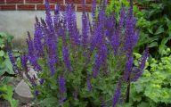 Purple Flowers Perennials  12 Desktop Background