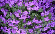 Purple Flowers Perennials  13 Desktop Wallpaper