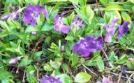 Purple Flowers Perennials  21 Widescreen Wallpaper