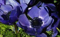 Purple Flowers Photo  11 High Resolution Wallpaper