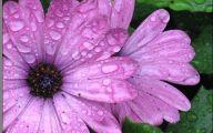 Purple Flowers Photo  12 Hd Wallpaper