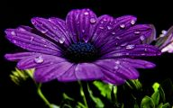 Purple Flowers Picture  14 Hd Wallpaper