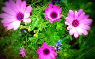 Purple Flowers Pinterest  29 Background