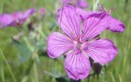 Purple Flowers Pinterest  7 Hd Wallpaper