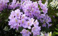 Purple Flowers Plants  23 Cool Hd Wallpaper