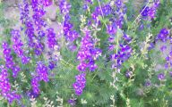 Purple Flowers Plants  26 Widescreen Wallpaper