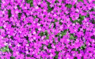 Purple Flowers Plants  27 Desktop Background