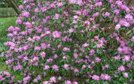 Purple Flowers Plants  28 Hd Wallpaper