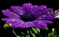 Purple Flowers Poem  10 Free Hd Wallpaper