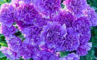 Purple Flowers Quotes  16 Desktop Wallpaper