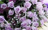 Purple Flowers Roses  2 High Resolution Wallpaper