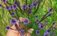 Purple Flowers Summer  33 Hd Wallpaper