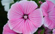 Purple Flowers Summer  34 Desktop Background
