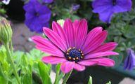 Purple Flowers Summer  38 Background