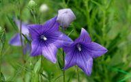 Purple Flowers That Bloom At Night  14 Free Wallpaper
