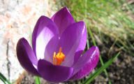 Purple Flowers That Bloom At Night  15 Cool Hd Wallpaper
