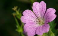 Purple Flowers That Bloom At Night  16 Desktop Background