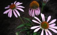 Purple Flowers That Bloom At Night  22 Cool Hd Wallpaper