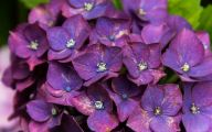Purple Flowers That Bloom At Night  25 Widescreen Wallpaper
