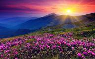 Purple Flowers That Bloom At Night  5 Hd Wallpaper
