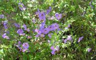 Purple Flowers That Bloom At Night  9 Free Hd Wallpaper
