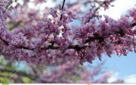 Purple Flowers Tree  1 Background Wallpaper