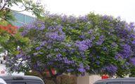 Purple Flowers Tree  10 Desktop Wallpaper