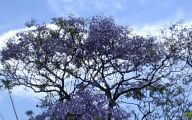 Purple Flowers Tree  11 Cool Hd Wallpaper