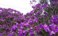 Purple Flowers Tree  13 Hd Wallpaper