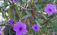 Purple Flowers Tree  14 Background Wallpaper