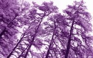 Purple Flowers Tree  15 Desktop Wallpaper