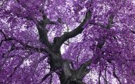 Purple Flowers Tree  17 Background Wallpaper