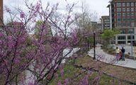 Purple Flowers Tree  21 Wide Wallpaper