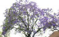 Purple Flowers Tree  24 Hd Wallpaper