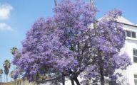 Purple Flowers Tree  25 Desktop Wallpaper