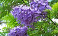 Purple Flowers Tree  26 High Resolution Wallpaper