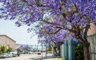 Purple Flowers Tree  29 Free Hd Wallpaper
