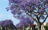 Purple Flowers Tree  30 Desktop Wallpaper