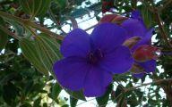 Purple Flowers Tree  4 Cool Hd Wallpaper