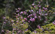 Purple Flowers Tree  5 Desktop Wallpaper