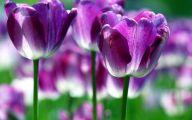 Purple Flowers Types  12 Wide Wallpaper