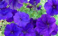 Purple Flowers Types  15 Cool Hd Wallpaper