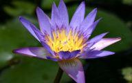 Purple Flowers Types  16 Cool Hd Wallpaper