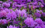 Purple Flowers Types  17 Wide Wallpaper