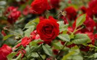 Red Flowers For Garden  34 Cool Hd Wallpaper