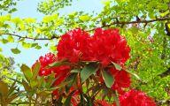 Red Flowers For Garden  39 Desktop Wallpaper