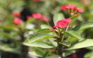 Red Flowers With Thorns  10 Free Hd Wallpaper